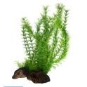 Flora Root 3