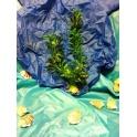 Spygliuotas plastmasinis augalas