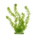 Hornwort 30cm