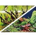 "Dvipusis fonas ""Green Seccret/ Wood Island"" 30cm h"