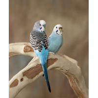 Paukščiams